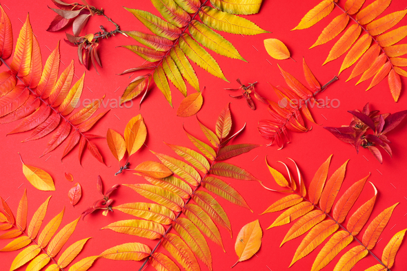 Creative layout of colorful autumn leaves over red background. Top view. Flat lay. Autumn concept - Stock Photo - Images
