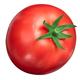 Globe tomato s. lycopersicum, paths - PhotoDune Item for Sale