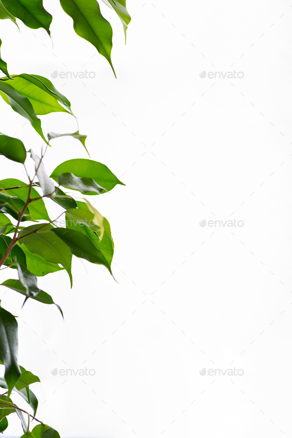 Beautiful frame green leaf with drops of water on gray background - Stock Photo - Images