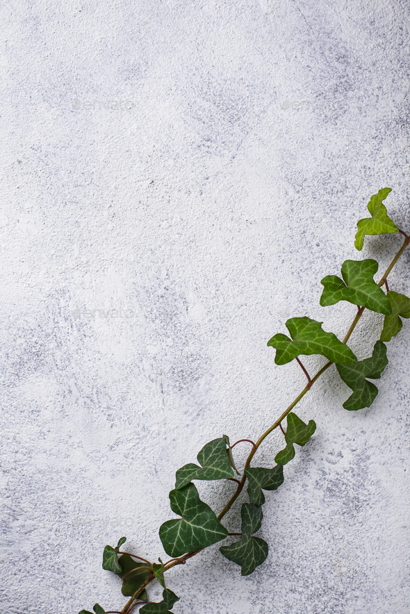 Green plant on light background - Stock Photo - Images