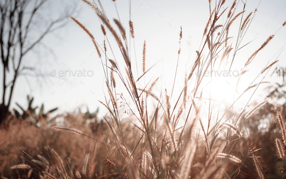 Wilted grass in early autumn - Stock Photo - Images