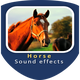 Horse Whinnying and Snorting Sounds