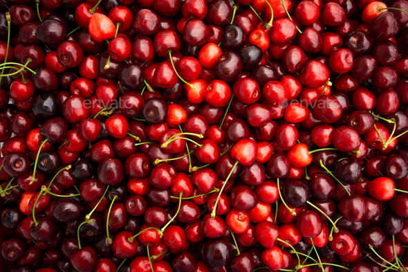 cherries with stalks - Stock Photo - Images