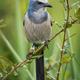 Florida Scrub Jay - PhotoDune Item for Sale