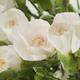 Flower bouquet - PhotoDune Item for Sale