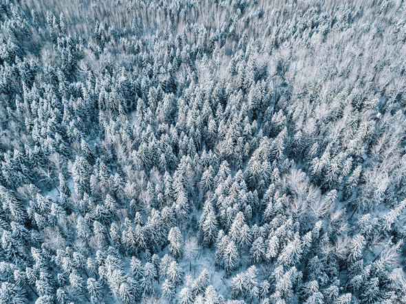 Aerial view of winter forest landscape with snow covered trees in Finland - Stock Photo - Images