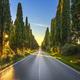 Bolgheri famous cypresses tree straight boulevard. Maremma, Tuscany, Italy - PhotoDune Item for Sale
