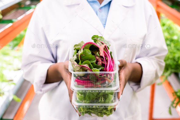 Fresh beet leaves in plastic container on top of stack held by young agronomist - Stock Photo - Images