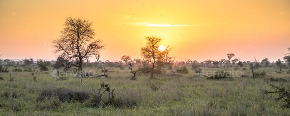 Sunrise over savanna - Stock Photo - Images