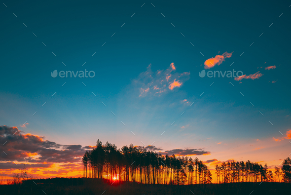 Sunset Sunrise In Pine Forest. Sun Sunshine In Sunny Coniferous Forest. - Stock Photo - Images