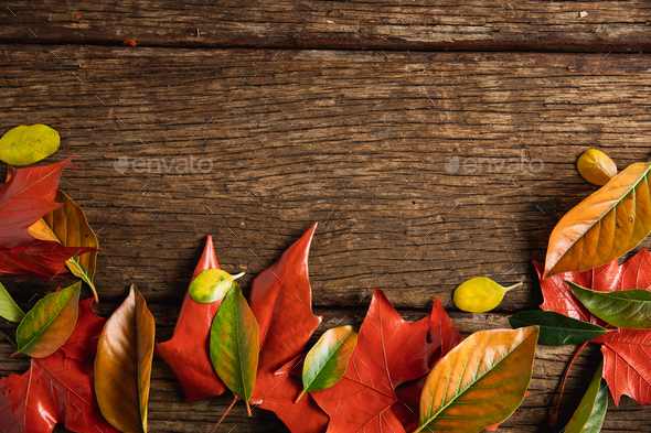 Autumn flat lay with leaves - Stock Photo - Images