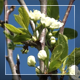 Green Leaves And White Flowers - VideoHive Item for Sale