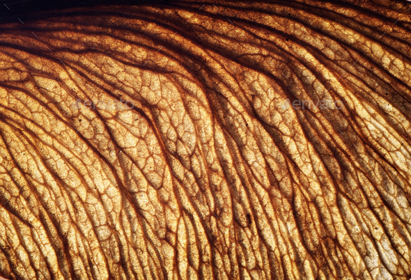 Bio macro texture - Stock Photo - Images