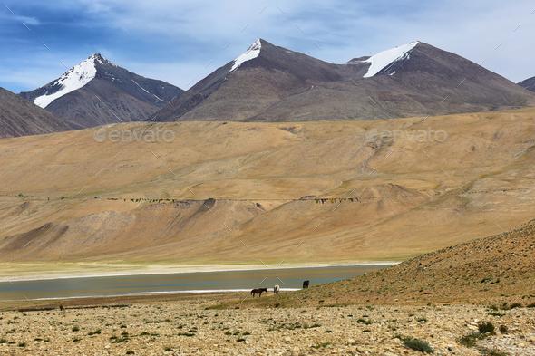 Himalayan lake Kyagar Tso in the afternoon. Korzok, Ladakh, India - Stock Photo - Images