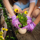Two people - mother and daughter - are planting flower to the pot to decorate the garden - PhotoDune Item for Sale