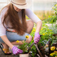 Young woman gardening - planting flowers into flower pot - PhotoDune Item for Sale