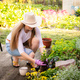 Woman gardener transplanting flowers from pot into wet soil after watering it with watering can - PhotoDune Item for Sale