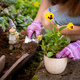 Woman's hands planting yellow flowers in the garden - PhotoDune Item for Sale