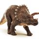 Triceratops on white - PhotoDune Item for Sale