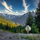 Landscape view of mountain range and lonely sheep, Vrsic pass, Slovenia - PhotoDune Item for Sale