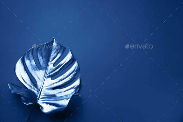 Exotic summer trend in minimal style. Tropical palm monstera leaf on classic blue color background - Stock Photo - Images