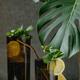 Lemon and mint lemonade - PhotoDune Item for Sale