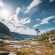 Kinsarvik, Hordaland, Norway. Summer Forest In Hardangervidda Mountain Plateau. Famous Norwegian - PhotoDune Item for Sale