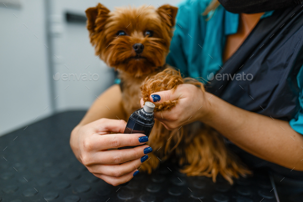 Female groomer polishing the claws of cute dog - Stock Photo - Images