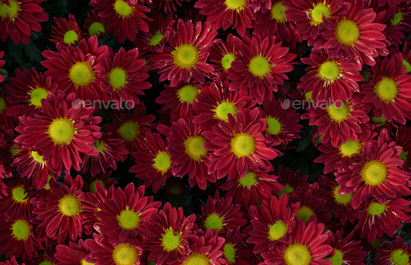 Background of flowers in bloom - Stock Photo - Images