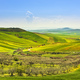 Apulia countryside view olive trees and rolling hills landscape. Poggiorsini, Italy - PhotoDune Item for Sale