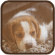 Cute Dogs Puzzle • HTML5 + C2 Game