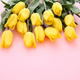 Beautiful flower collection Stock Photo. close up, isolated on background. vertical with copy space. - PhotoDune Item for Sale