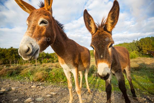 Wild donkey - Stock Photo - Images