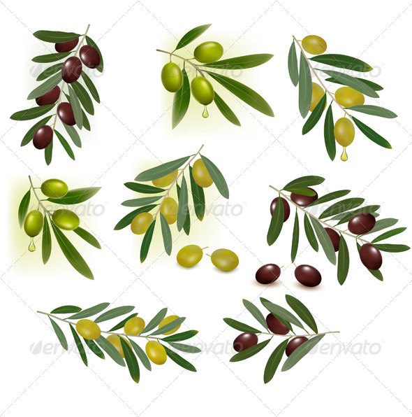 Set of green and black olives. Vector illustration - Flowers & Plants Nature