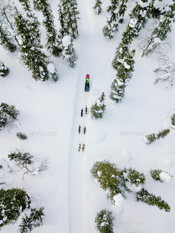 Aerial view of sledding with husky dogs in Lapland Finland. - Stock Photo - Images