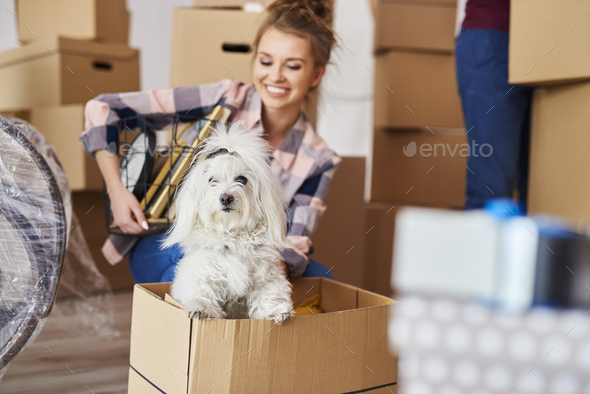 Happy dog in new house - Stock Photo - Images