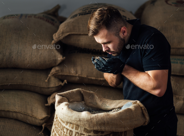 young worker sniffing a fistful of fresh raw beans from burlap bag at coffee roaster warehouse - Stock Photo - Images