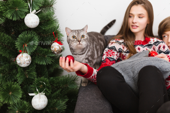 Photo of beautiful cat standing near Christmas tree and pretty girl sitting near on sofa at home - Stock Photo - Images