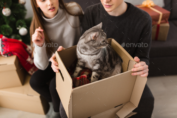 Close up photo of beautiful cat sitting in box on man knees at home - Stock Photo - Images