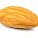 Single almond nut on white background - PhotoDune Item for Sale