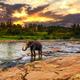 Elephant bathing in the river. Pinnawala Elephant Orphanage. Sri Lanka - PhotoDune Item for Sale