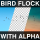 Flock Of Birds With Alpha Channel - VideoHive Item for Sale