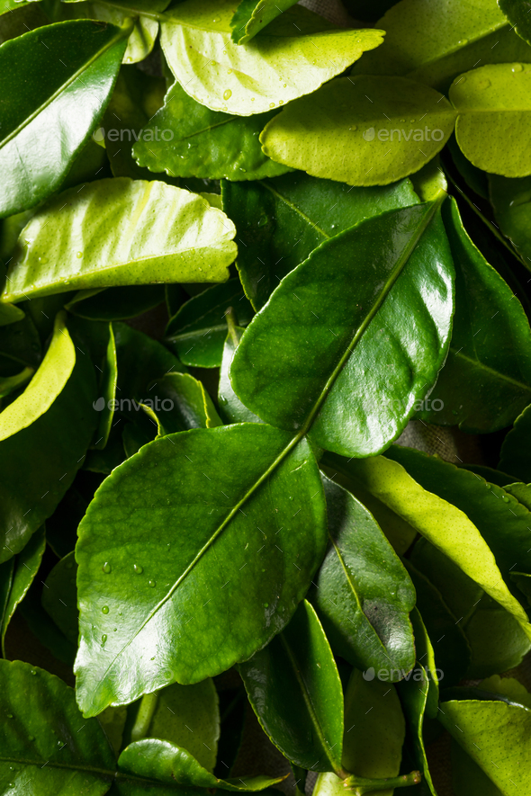 Raw Green Organic Kaffir Lime Leaves - Stock Photo - Images