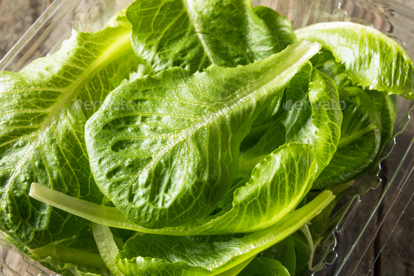 Raw Green Organic Romaine Leaves - Stock Photo - Images