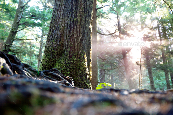 Sunny forest - Stock Photo - Images