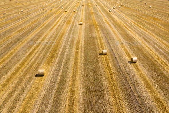Flight over the field during haymaking. Round haystacks are scattered across the field - Stock Photo - Images