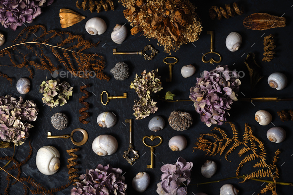 Arrangement of vintage keys, dried flowers and plants, shells - Stock Photo - Images