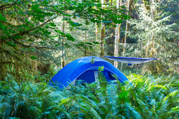 Tent in the forest - Stock Photo - Images