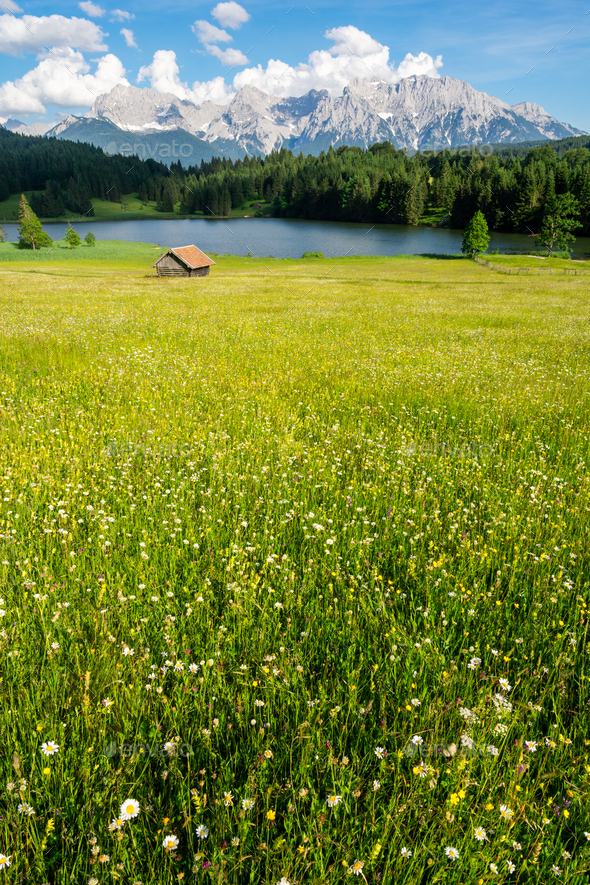 Alpine Lake and flowering meadow in Bavaria - Stock Photo - Images