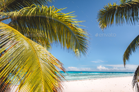 Palm tree leaves against tropical sandy beach and blue ocean. Travel tourism concept - Stock Photo - Images